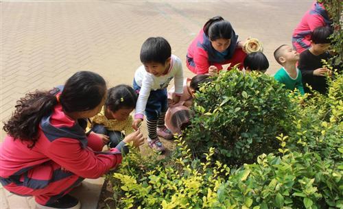 幼儿种植步骤图